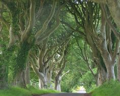 Dark Hedges is a unique stretch of the Bregagh Road near Armoy, in Ireland