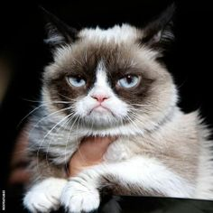 It's World Internet Day! We're dedicating it to this happy guy. #GrumpyCat pic.twitter.com/752xR9crXO