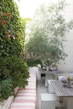 Succulents and olive tree in courtyard, by #peterfudge