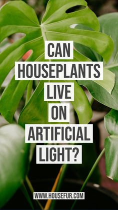 Can Houseplants live on Artificial Light?
