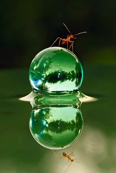 Macro Photography £. Green; ant; drop; reflection