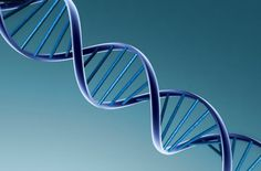 Variante genética rara pode ser causa da esclerose múltipla   #DNA, #Enzima, #Esclerose, #Genética, #GENOMA, #Mutante, #Raquitismo, #VitaminaD
