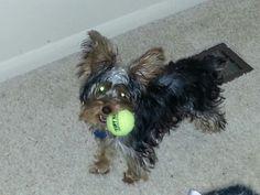 She loves her little tennis ball