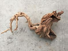 XXX large Manzanita Wood -- driftwood plant shrimp moss discus spiderwood branch #wood