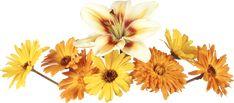 GIFS HERMOSOS: flores encontrads en la web Flower Phone Wallpaper, I Wallpaper, Flower Images, Flower Art, Transparent Flowers, Telegram Stickers, Gifs, Photoshop, Felt Flowers