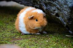 Piggie by Aienhime on Flickr.