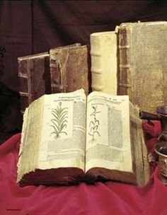 Herb & Supplement Encyclopedia via Flora Health http://www.florahealth.com/herbal_usa.cfm