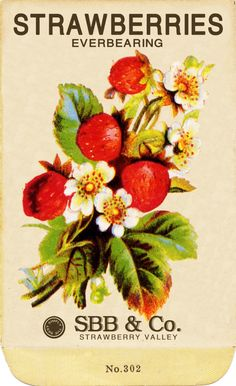 Free Scrapbook Graphics: Vintage Strawberry Seed Packet
