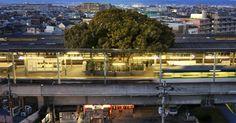 Monumentale natuur in de stad Osaka bij Kayashima Station. Een Japans treinstation dat rondom een 700 jaar oude boom gebouwd is.