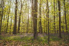#woodland #bluebells