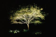 aesthetic landscape lighting ideas - Google Search