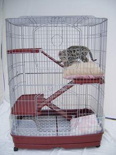 1000 Images About Cat Cages On Pinterest Cat Cages Cat