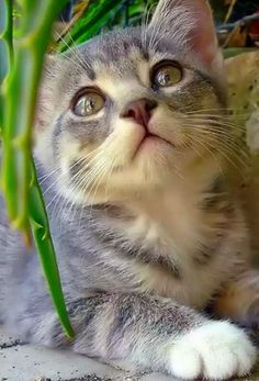 Hi pet lovers nice videos, buy all pet products at one place. https://www.marshallspetzone.com/14-Cat