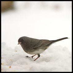 Junko my favorite Bird