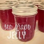 Our second attempt at making sea grape jelly went so much smoother than the first! So fun to can stuff from your own backyard!