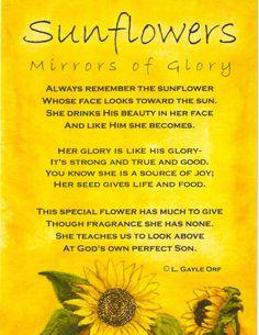 Sunflowers:  Mirrors of Glory