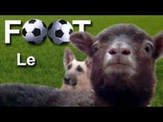 Le foot - French football -which is soccer to us here - cute one minute clip French Teacher, Teaching French, Ontario Curriculum, Learn To Speak French, Funny French, Core French, French Education, French Classroom, French Clip