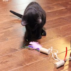 Cats Toys Ideas - Your cat will love these easy homemade cat toys made from wine corks - Ideal toys for small cats
