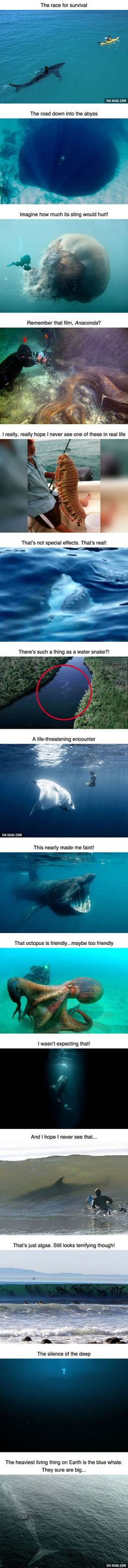8a6cb77d8 15 Photos That Will Make You Think Twice About Going Swimming Funny Animals,  Wild Animals