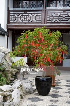 Image result for chinese courtyard garden