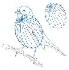 How to draw a Song Sparrow step-by-step - John Muir Laws