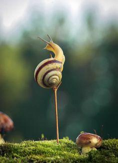 Balancing Snail <3