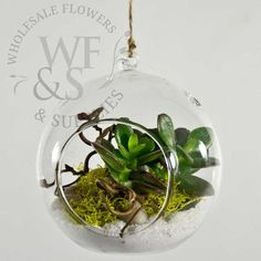 Hanging Glass Terrarium Votive Holder in 3 different sizes at cheap discounted prices at Wholesale Flowers in San Diego. - Wholesale Flowers and Supplies