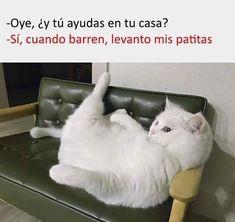 Funny Spanish Memes, Spanish Humor, Disney Channel, Stupid Funny Memes, Hilarious, Funny Cats, Funny Animals, Wild Animals, Baby Animals