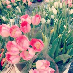 Tulips at the farmers market | @designconundrum