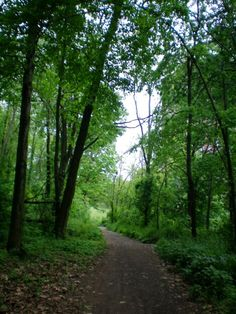 Bankside Grove, Pope Park, Frog Hollow, Hartford, CT