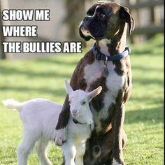 El perro y la cabrita...