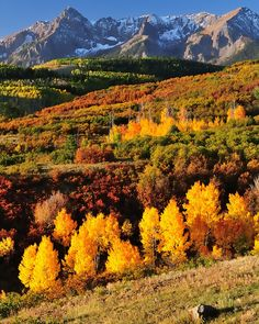 Morning light on the Sneffels range Colorado, photo by...Armullis.