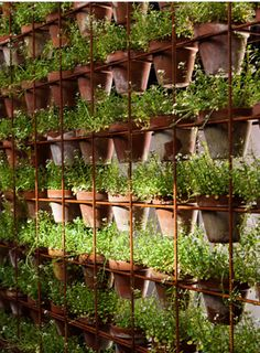 Vertical Gardens vertical garden - for the wall hiding the rainwater tanks etc Herb Garden, Vegetable Garden, Vertikal Garden, Water Collection System, Plantation, Container Gardening, Balcony Gardening, Garden Inspiration, Organic Gardening
