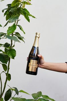 Chandon enthusiasts, unite. Australian Sweets, To Spoil, Gift Hampers, Black Gold, Luxury, Bottle, Holiday, Gifts, Gift Baskets
