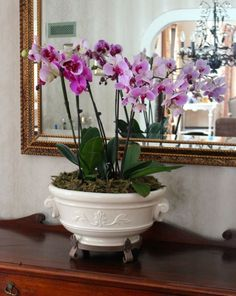 Orchids in ceramic planter urn.