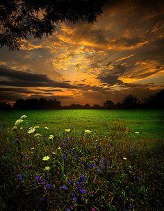 sun rise on a field by Phil Koch