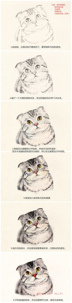 Cute cat drawing. Color pencil techniques. Step by step tutorial for beginner. Animal pet illustration. 绘三木喵-璇子鱼