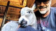 JDM and a mini donkey?! I'm literally dead. ❤️ #jeffreydeanmorgan #jdm