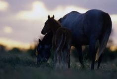 Disaster Preparedness Tip for Horse Owners: Stay up to date on vaccinations. #horsehealth