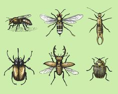 vintage engraved, hand drawn illustrations of insects, beetles , bees and flies  in old scratchboard style