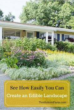 Edible landscaping is an easy way to grow food while keeping a front yard beautiful and tidy. Based on lessons I learned from keeping an edible front yard for five years, this article will help you create a bountiful edible landscape.: