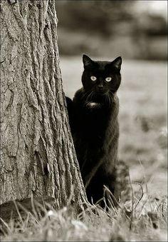♥Black cat Paula