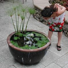 "Container water garden?? I'm SO there! I wonder if you could even do one with little goldfishies in it!!! ""Making Your Own Container Water Garden"""