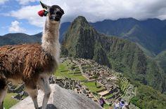 Machu Pichu - been there