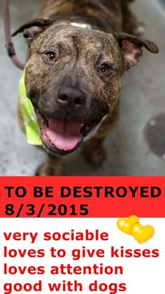 SAFE 8-15-2015 --- TO BE DESTROYED 8/3/2015 Brooklyn Center – P  My name is PRESTON. My Animal ID # is A1044729. I am a male br brindle am pit bull ter mix. The shelter thinks I am about 6 YEARS old.  I came in the shelter as a STRAY on 07/20/2015 from NY 11434, owner surrender reason stated was STRAY. http://nycdogs.urgentpodr.org/preston-a1044729/