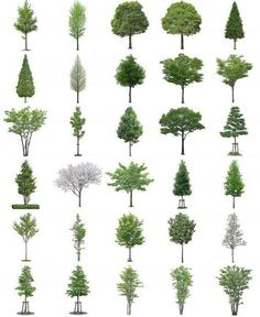 Photoshop Tree and Bush Files section render Architecture Graphics, Architecture Drawings, Landscape Architecture, Landscape Design, Architecture Design, 3d Max Vray, Planer Layout, Landscape Drawings, Photomontage
