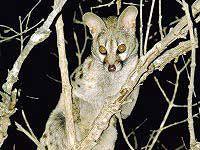 Genit - Warthog Lodge Animal Species, Nature Reserve, South Africa, Wildlife, Gallery, Cats, Animals, Gatos, Animales