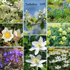 Kuvia neljästä vuodenajasta: Toukokuu Plants, Plant, Planets