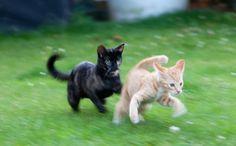 Overjoyed Feral Kittens Reunite