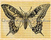 Vintage Butterfly Digital Download